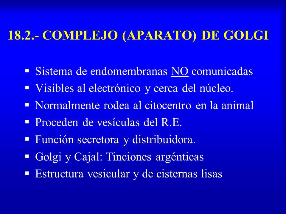 18.2.- COMPLEJO (APARATO) DE GOLGI Sistema de endomembranas NO comunicadas Visibles al electrónico y cerca del núcleo. Normalmente rodea al citocentro