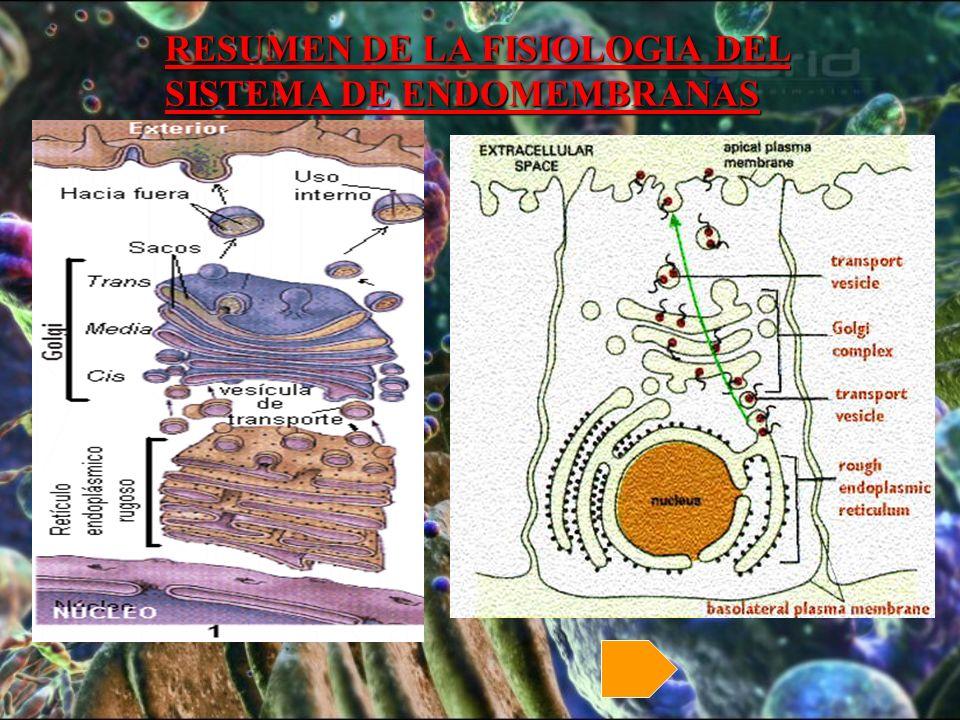 RESUMEN DE LA FISIOLOGIA DEL SISTEMA DE ENDOMEMBRANAS RESUMEN DE LA FISIOLOGIA DEL SISTEMA DE ENDOMEMBRANAS