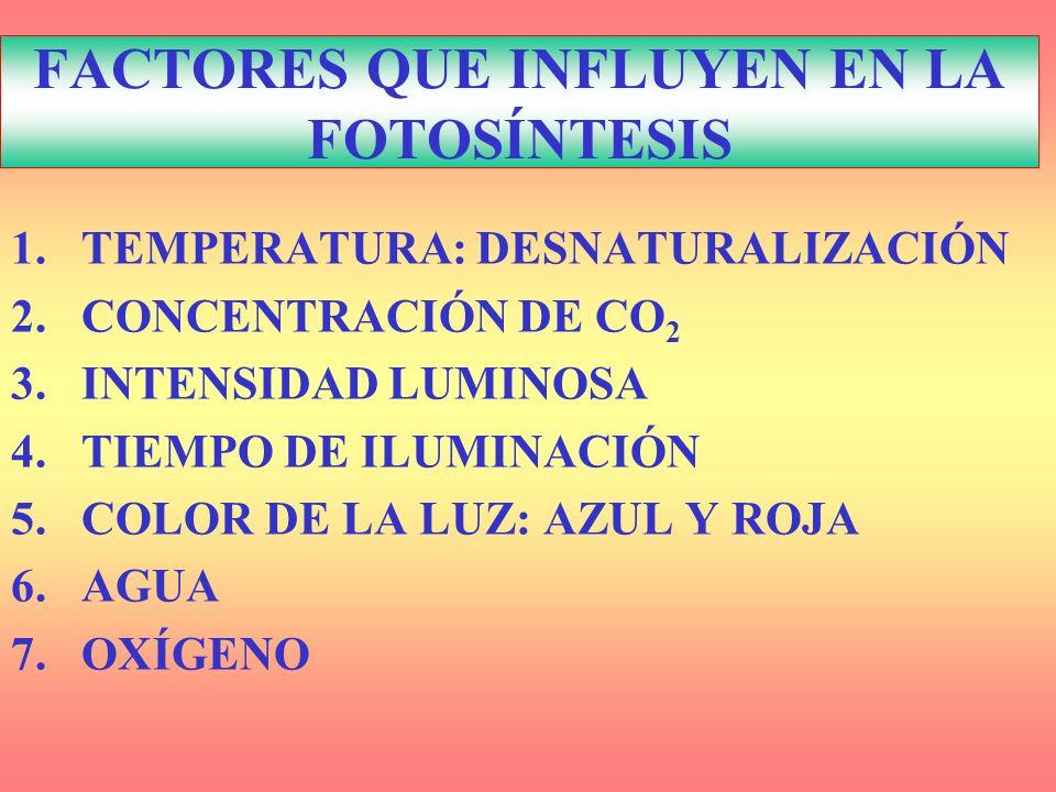 FACTORES QUE INFLUYEN EN LA FOTOSÍNTESIS 1.TEMPERATURA: DESNATURALIZACIÓN 2.CONCENTRACIÓN DE CO 2 3.INTENSIDAD LUMINOSA 4.TIEMPO DE ILUMINACIÓN 5.COLO