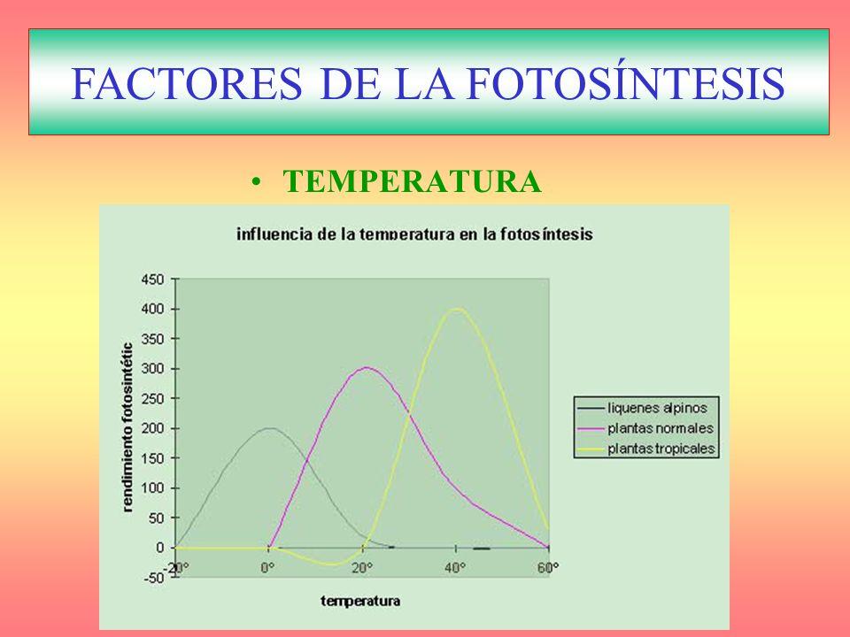 Factores reguladores de la Fotosíntesis TEMPERATURA FACTORES DE LA FOTOSÍNTESIS