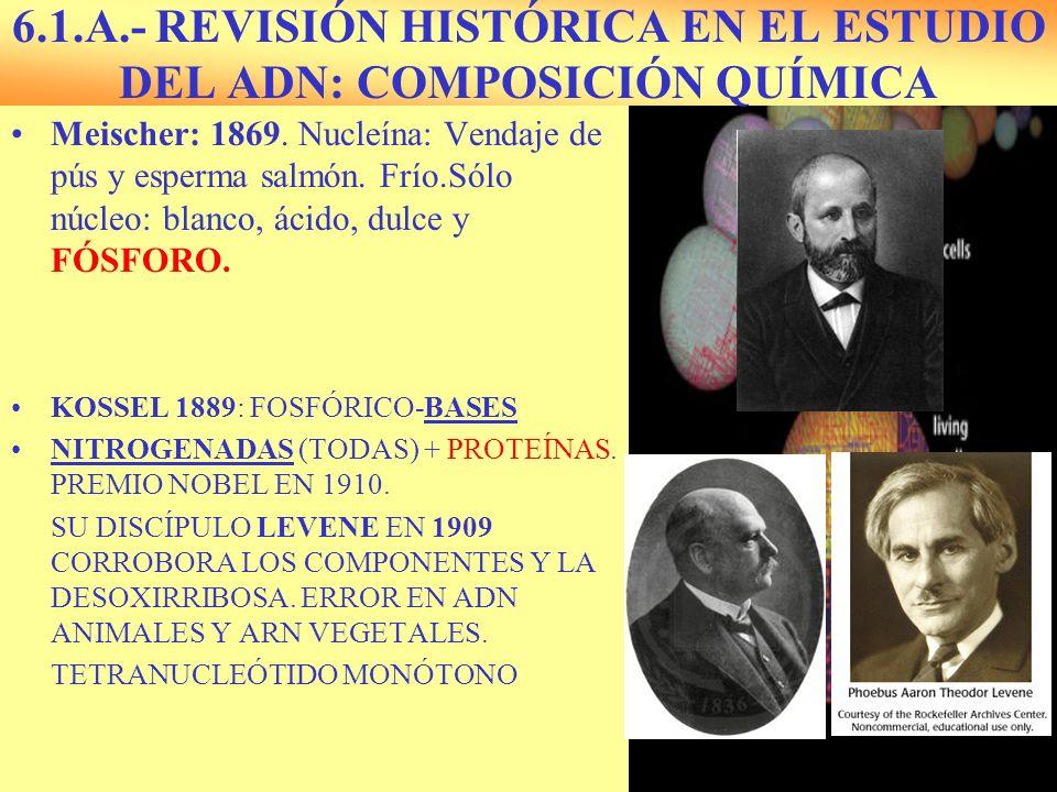 6.1.A.- REVISIÓN HISTÓRICA EN EL ESTUDIO DEL ADN: COMPOSICIÓN QUÍMICA Meischer: 1869. Nucleína: Vendaje de pús y esperma salmón. Frío.Sólo núcleo: bla