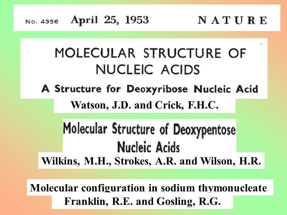 Molecular configuration in sodium thymonucleate Watson, J.D. and Crick, F.H.C. Wilkins, M.H., Strokes, A.R. and Wilson, H.R. Franklin, R.E. and Goslin
