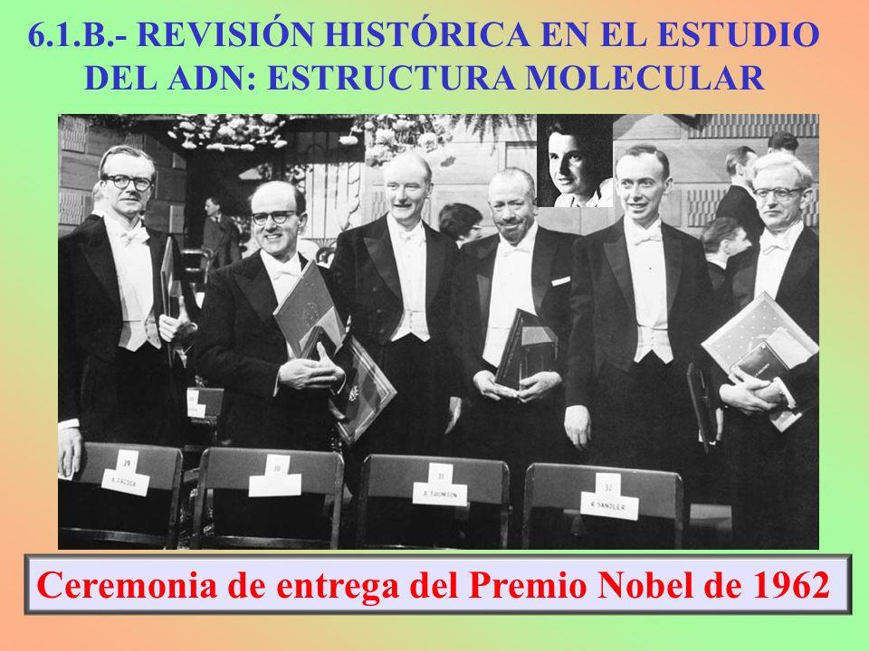 Ceremonia de entrega del Premio Nobel de 1962 6.1.B.- REVISIÓN HISTÓRICA EN EL ESTUDIO DEL ADN: ESTRUCTURA MOLECULAR