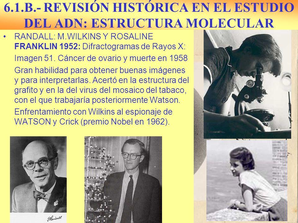 6.1.B.- REVISIÓN HISTÓRICA EN EL ESTUDIO DEL ADN: ESTRUCTURA MOLECULAR RANDALL: M.WILKINS Y ROSALINE FRANKLIN 1952: Difractogramas de Rayos X: Imagen