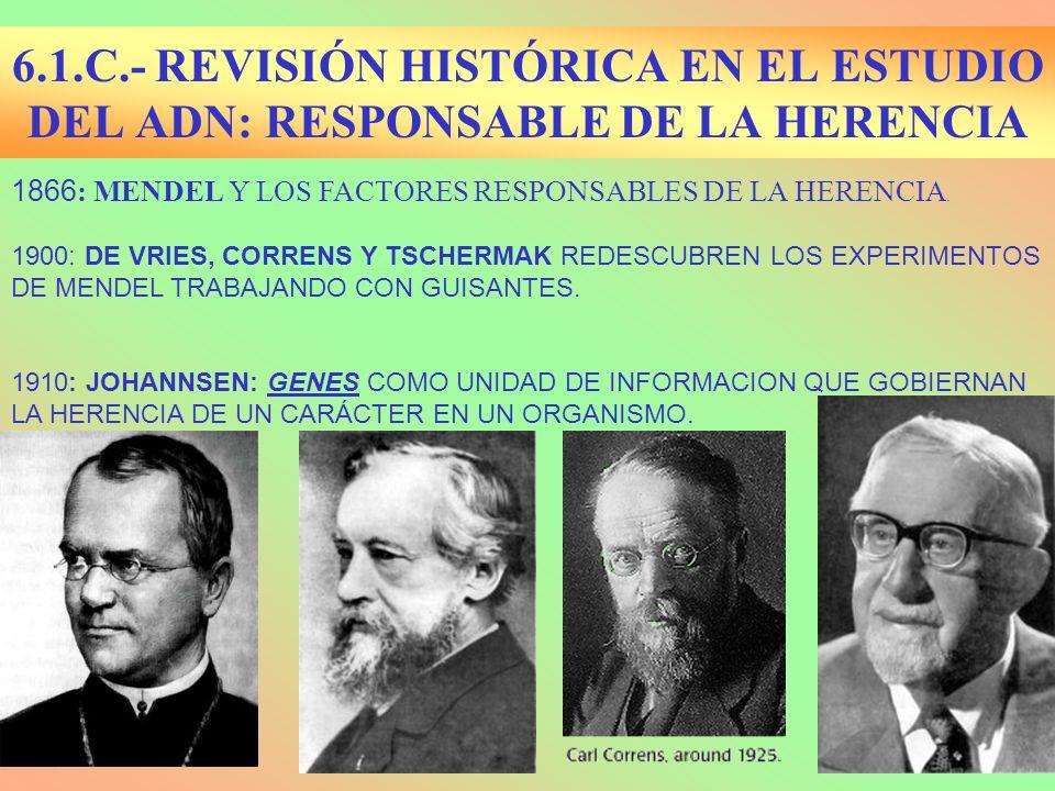 1866 : MENDEL Y LOS FACTORES RESPONSABLES DE LA HERENCIA. 1900: DE VRIES, CORRENS Y TSCHERMAK REDESCUBREN LOS EXPERIMENTOS DE MENDEL TRABAJANDO CON GU