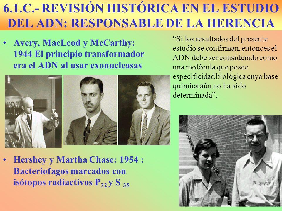 6.1.C.- REVISIÓN HISTÓRICA EN EL ESTUDIO DEL ADN: RESPONSABLE DE LA HERENCIA Avery, MacLeod y McCarthy: 1944 El principio transformador era el ADN al