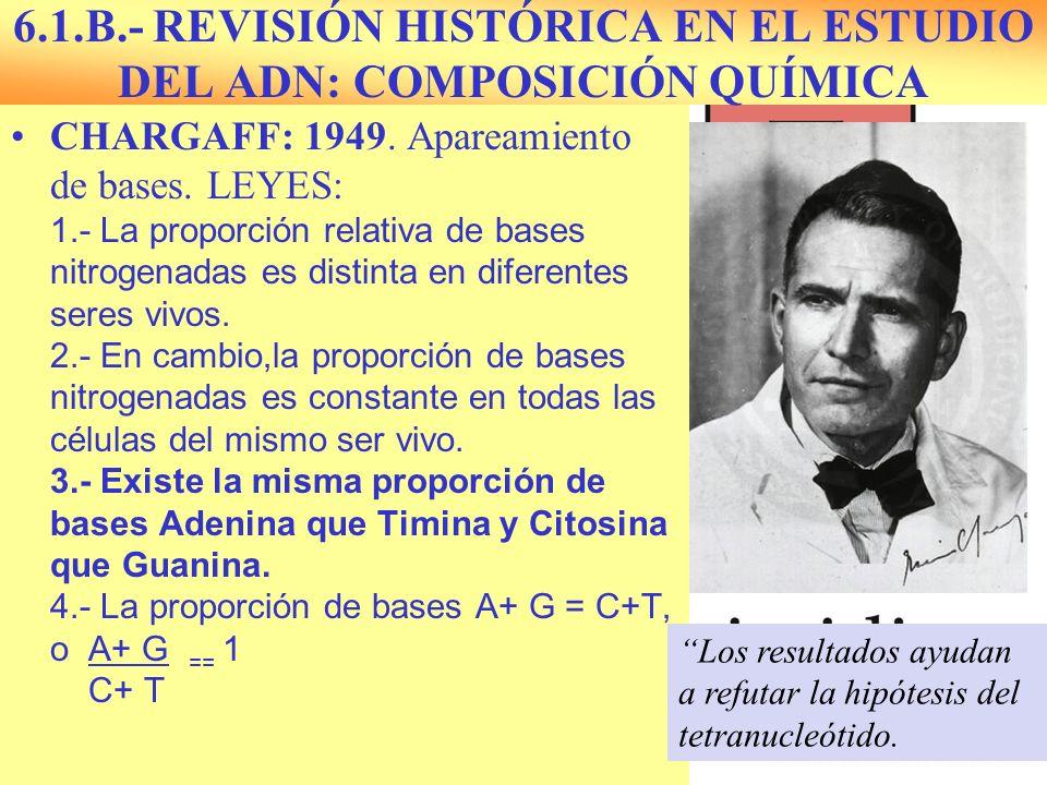 6.1.B.- REVISIÓN HISTÓRICA EN EL ESTUDIO DEL ADN: COMPOSICIÓN QUÍMICA CHARGAFF: 1949. Apareamiento de bases. LEYES: 1.- La proporción relativa de base