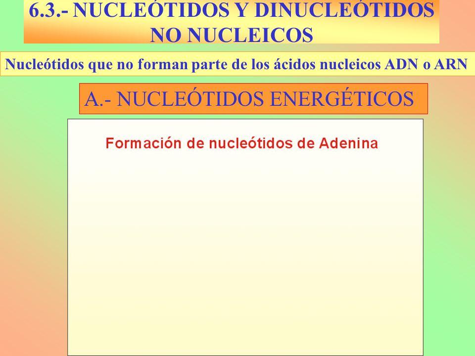 6.3.- NUCLEÓTIDOS Y DINUCLEÓTIDOS NO NUCLEICOS Nucleótidos que no forman parte de los ácidos nucleicos ADN o ARN A.- NUCLEÓTIDOS ENERGÉTICOS