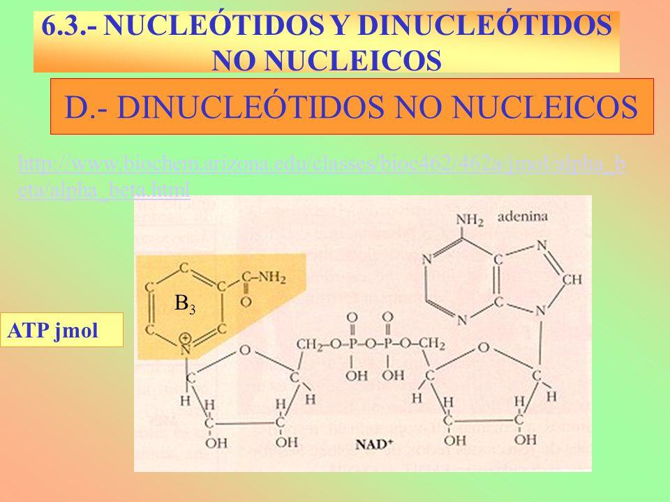 D.- DINUCLEÓTIDOS NO NUCLEICOS B3B3 6.3.- NUCLEÓTIDOS Y DINUCLEÓTIDOS NO NUCLEICOS ATP jmol http://www.biochem.arizona.edu/classes/bioc462/462a/jmol/a