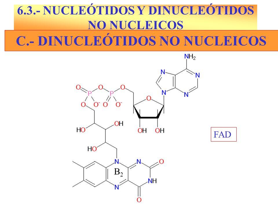 C.- DINUCLEÓTIDOS NO NUCLEICOS FAD B2B2 6.3.- NUCLEÓTIDOS Y DINUCLEÓTIDOS NO NUCLEICOS