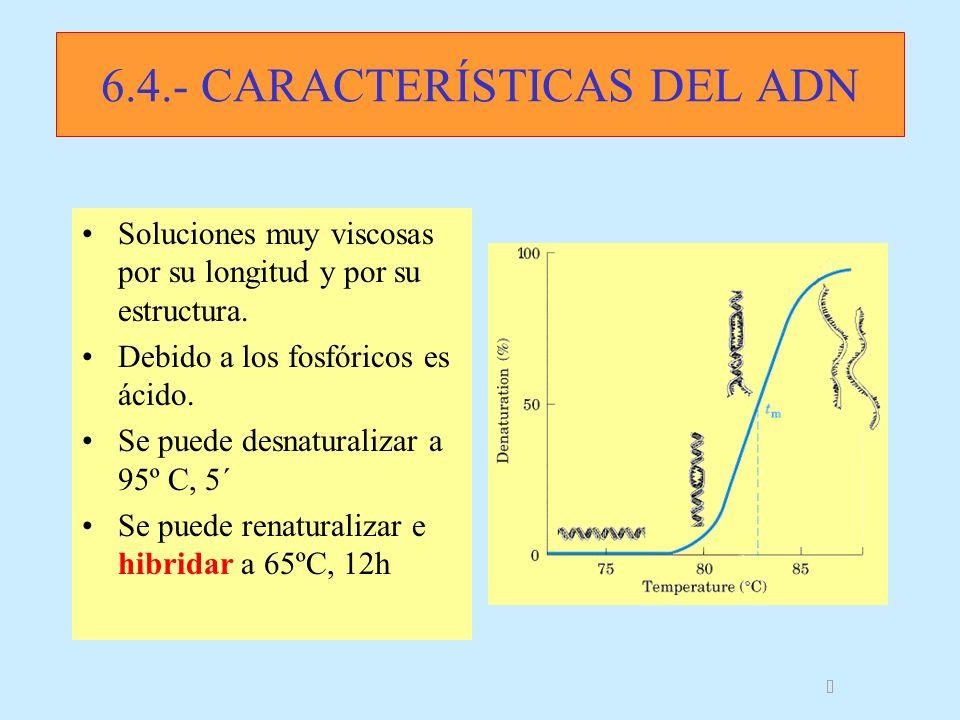 6.4.- CARACTERÍSTICAS DEL ADN Soluciones muy viscosas por su longitud y por su estructura. Debido a los fosfóricos es ácido. Se puede desnaturalizar a