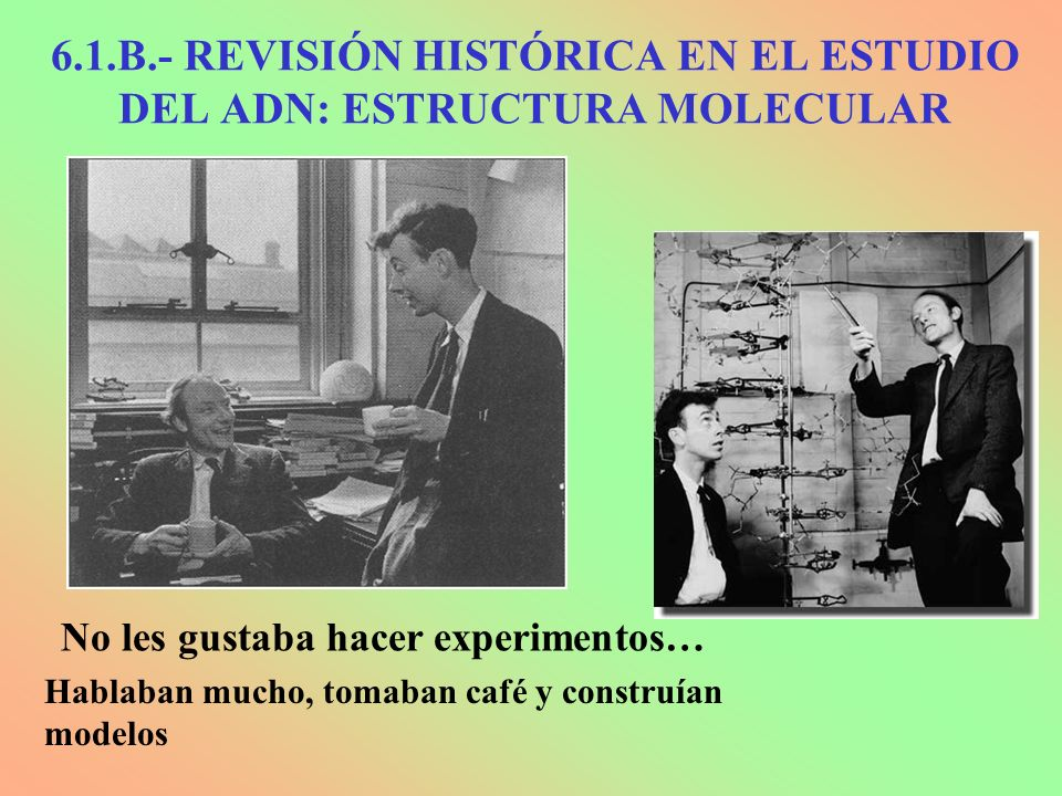 No les gustaba hacer experimentos… Hablaban mucho, tomaban café y construían modelos 6.1.B.- REVISIÓN HISTÓRICA EN EL ESTUDIO DEL ADN: ESTRUCTURA MOLE