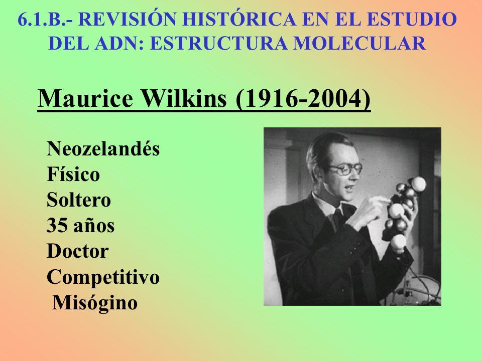 Maurice Wilkins (1916-2004) Neozelandés Físico Soltero 35 años Doctor Competitivo Misógino 6.1.B.- REVISIÓN HISTÓRICA EN EL ESTUDIO DEL ADN: ESTRUCTUR