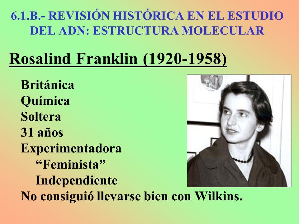 Rosalind Franklin (1920-1958) Británica Química Soltera 31 años Experimentadora Feminista Independiente No consiguió llevarse bien con Wilkins. 6.1.B.