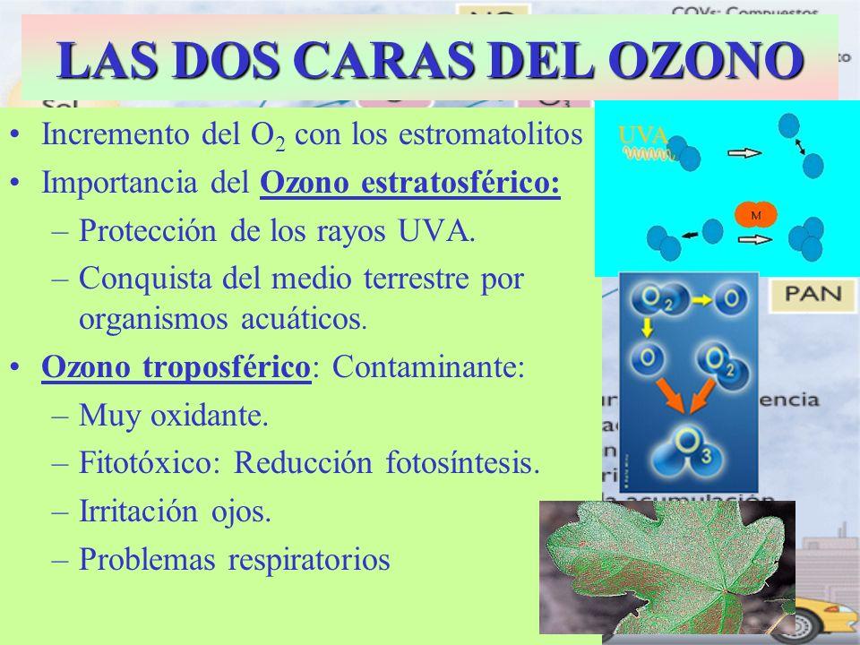 LAS DOS CARAS DEL OZONO Incremento del O 2 con los estromatolitos Importancia del Ozono estratosférico: –Protección de los rayos UVA. –Conquista del m