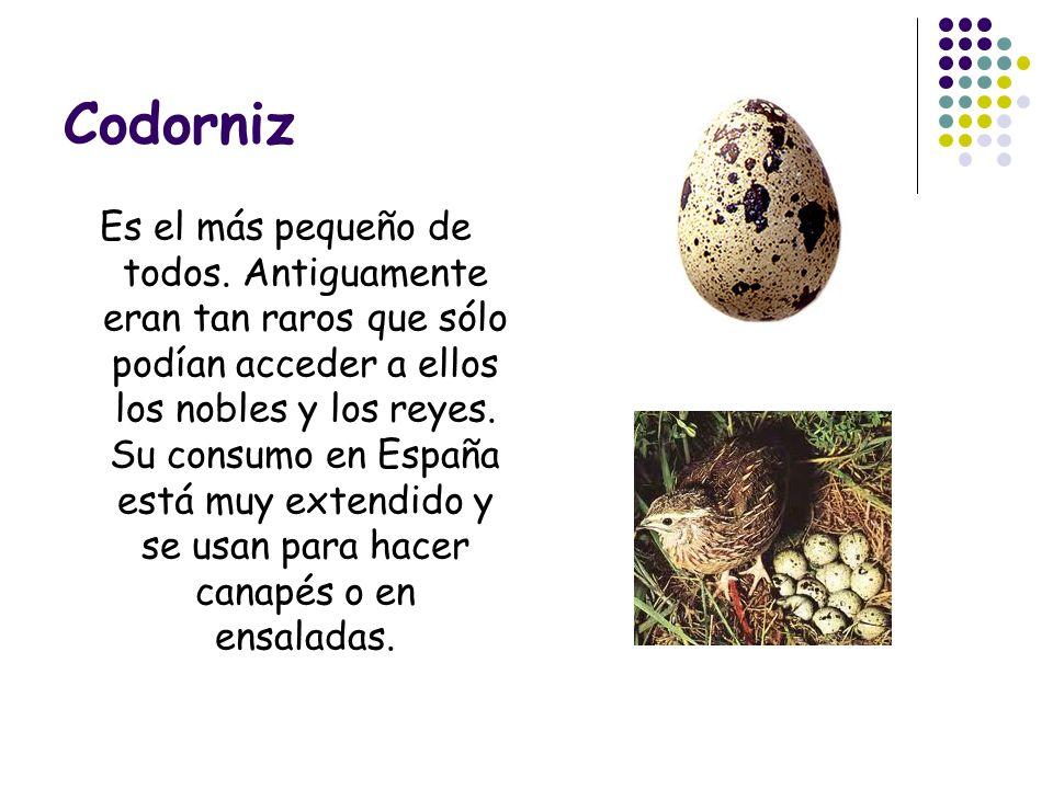 Codorniz Es el más pequeño de todos. Antiguamente eran tan raros que sólo podían acceder a ellos los nobles y los reyes. Su consumo en España está muy