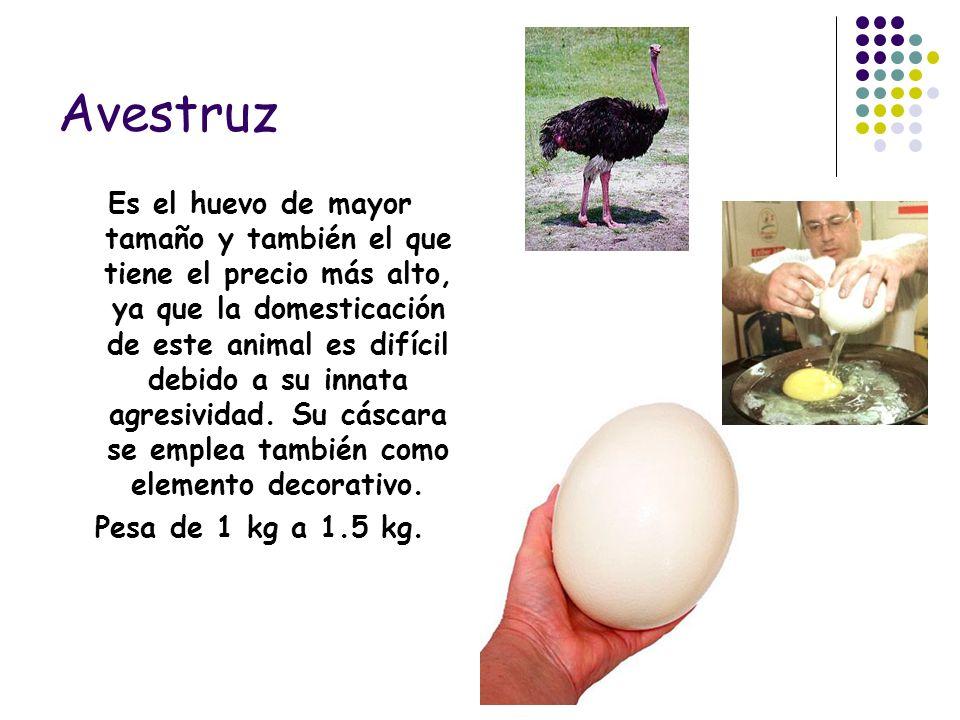 Avestruz Es el huevo de mayor tamaño y también el que tiene el precio más alto, ya que la domesticación de este animal es difícil debido a su innata a