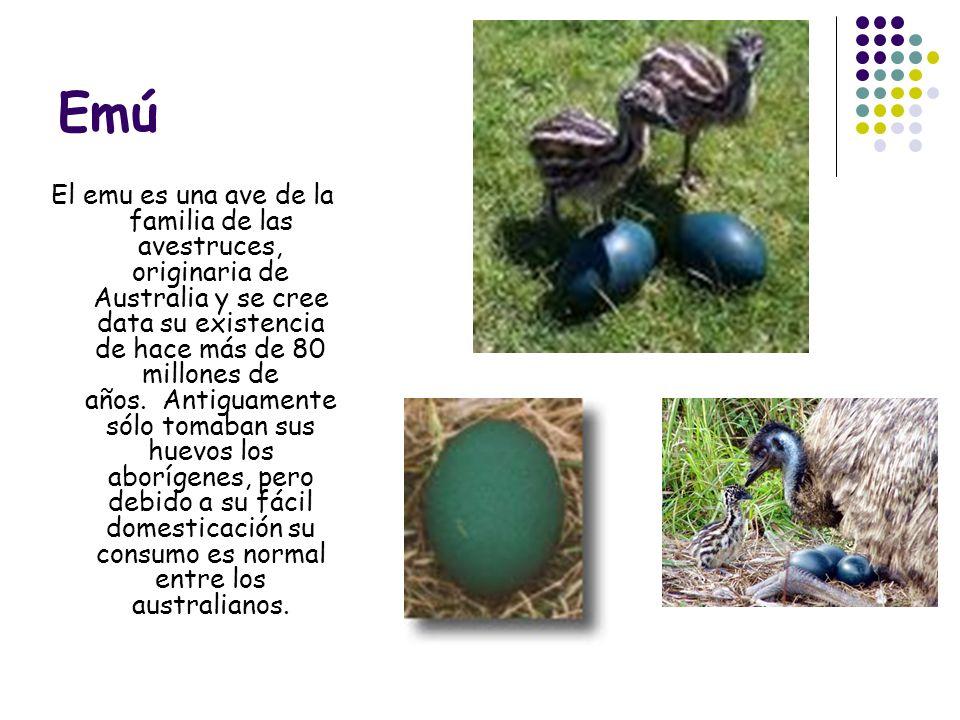 Oca Antes de que se iniciara la cría de la gallina el huevo de oca era el más popular.