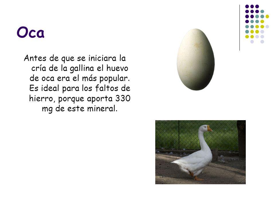Oca Antes de que se iniciara la cría de la gallina el huevo de oca era el más popular. Es ideal para los faltos de hierro, porque aporta 330 mg de est