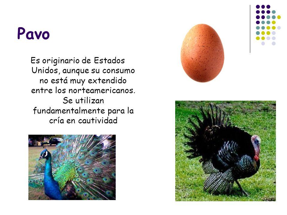 Pavo Es originario de Estados Unidos, aunque su consumo no está muy extendido entre los norteamericanos. Se utilizan fundamentalmente para la cría en