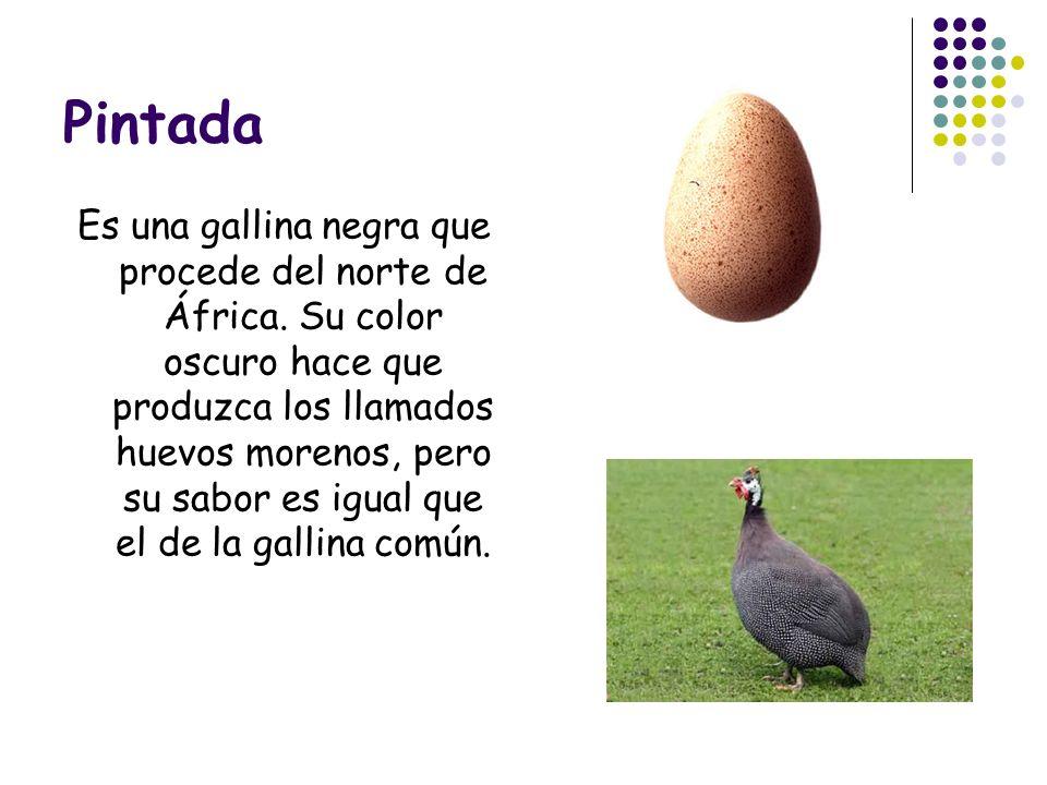 Pintada Es una gallina negra que procede del norte de África. Su color oscuro hace que produzca los llamados huevos morenos, pero su sabor es igual qu