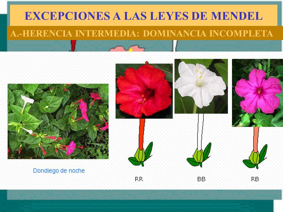 EXCEPCIONES A LAS LEYES DE MENDEL A.-HERENCIA INTERMEDIA: DOMINANCIA INCOMPLETA