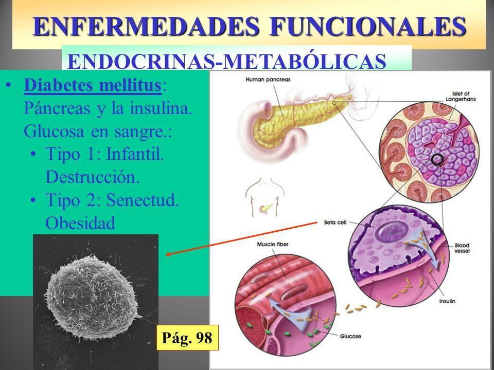 ENFERMEDADES FUNCIONALES ENDOCRINAS-METABÓLICAS Diabetes mellitus: Páncreas y la insulina. Glucosa en sangre.: Tipo 1: Infantil. Destrucción. Tipo 2: