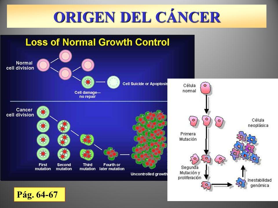 ORIGEN DEL CÁNCER Linfocitos en leucemia Vídeo