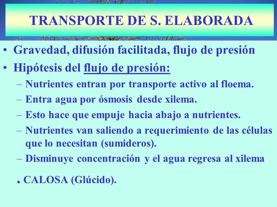 TRANSPORTE DE S. ELABORADA Gravedad, difusión facilitada, flujo de presión Hipótesis del flujo de presión: –Nutrientes entran por transporte activo al
