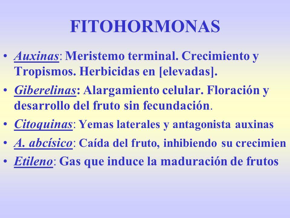 FITOHORMONAS Auxinas: Meristemo terminal. Crecimiento y Tropismos. Herbicidas en [elevadas]. Giberelinas: Alargamiento celular. Floración y desarrollo