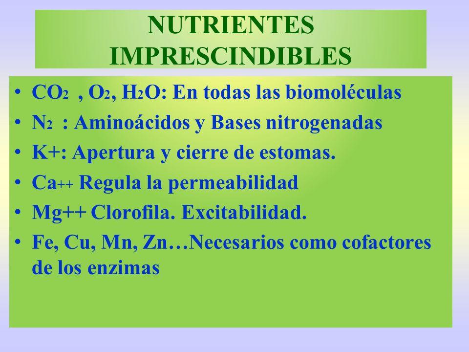 NUTRIENTES IMPRESCINDIBLES CO 2, O 2, H 2 O: En todas las biomoléculas N 2 : Aminoácidos y Bases nitrogenadas K+: Apertura y cierre de estomas. Ca ++