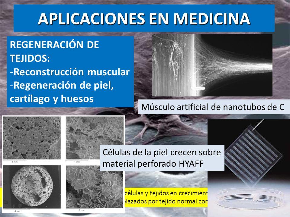 REGENERACIÓN DE TEJIDOS: -Reconstrucción muscular -Regeneración de piel, cartílago y huesos Nanomateriales que sirven de soporte a las células y tejid