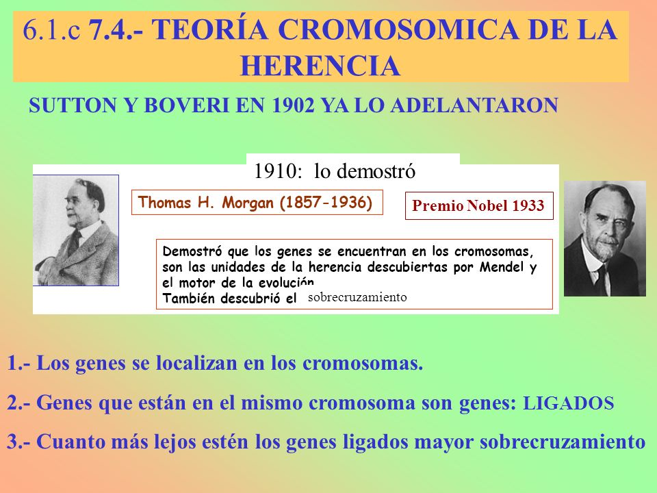 LIGAMIENTO Y RECOMBINACIÓN Concepto de Ligamiento: Dos loci están ligados cuando se encuentran situados sobre el mismo cromosoma.