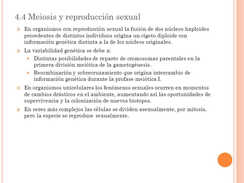 4.4 Meiosis y reproducción sexual En organismos con reproducción sexual la fusión de dos núcleos haploides procedentes de distintos individuos origina