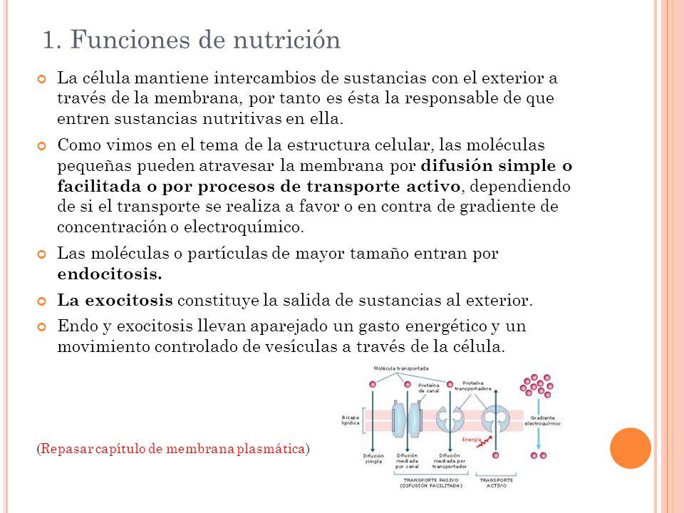 1. Funciones de nutrición La célula mantiene intercambios de sustancias con el exterior a través de la membrana, por tanto es ésta la responsable de q