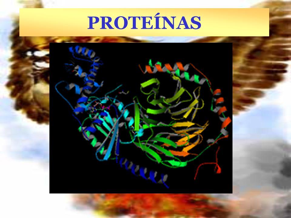 FUNCIONES DE LAS PROTEÍNAS TIPO FUNCIÓN Ejemplo Función concreta Enzimática Amilasa Digestión del almidón a glucosa Estructural Q ueratina colágeno Pelo, lana, uñas, cuernos, cascos, de los tendones, cartílagos Hormonal Insulina, Oxitocina Regula la glucosa en sangre Contracción del útero durante el parto Contráctil Actina, miosina Contracción de las fibras musculares Hemoglobina Mioglobina Transporta el oxígeno en la sangre y músculos Inmunológica Anticuerpos Inhibición del antígeno.