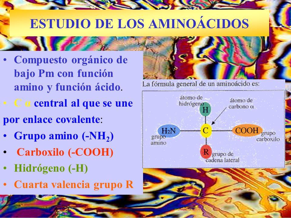 ESTUDIO DE LOS AMINOÁCIDOS Arginina al microscopio Compuesto orgánico de bajo Pm con función amino y función ácido. C α central al que se une por enla
