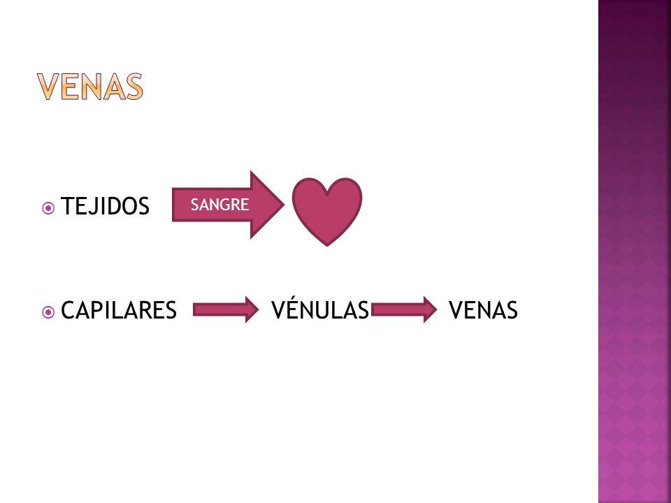 TEJIDOS CAPILARES VÉNULAS VENAS SANGRE
