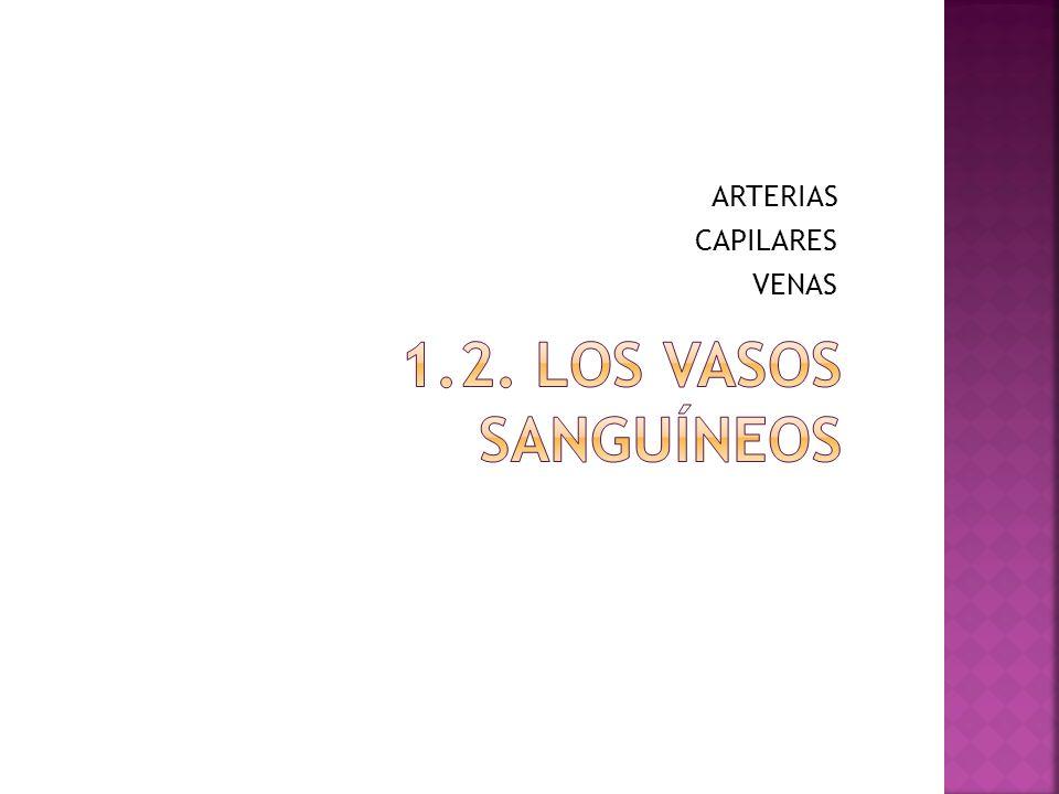 ARTERIAS CAPILARES VENAS
