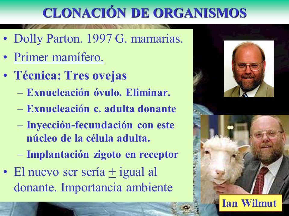 CLONACIÓN DE ORGANISMOS Dolly Parton. 1997 G. mamarias.