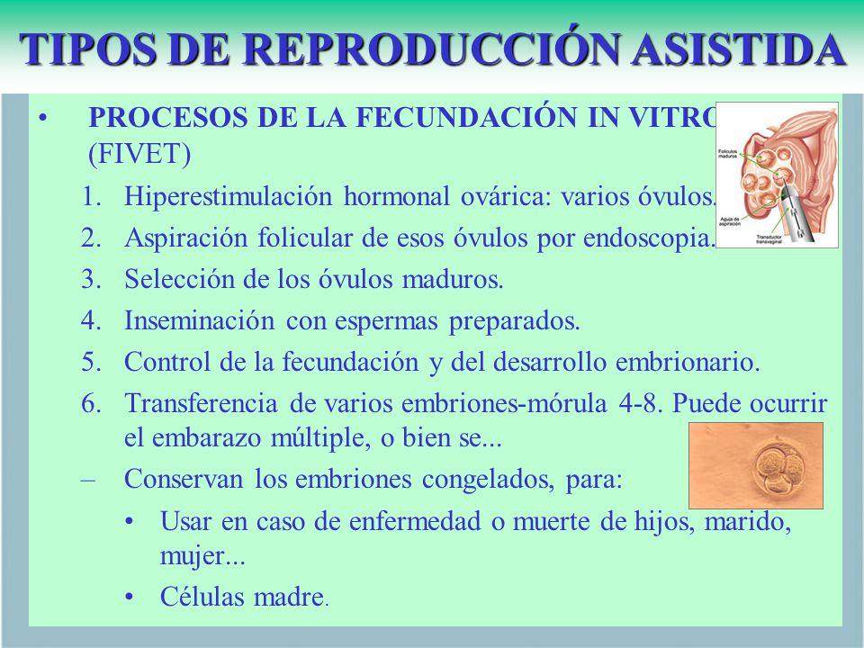 TIPOS DE REPRODUCCIÓN ASISTIDA PROCESOS DE LA FECUNDACIÓN IN VITRO (FIVET) 1.Hiperestimulación hormonal ovárica: varios óvulos.