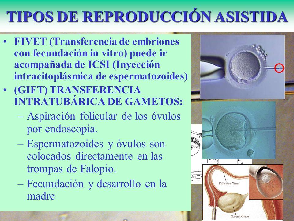 TIPOS DE REPRODUCCIÓN ASISTIDA FIVET (Transferencia de embriones con fecundación in vitro) puede ir acompañada de ICSI (Inyección intracitoplásmica de espermatozoides) (GIFT) TRANSFERENCIA INTRATUBÁRICA DE GAMETOS: –Aspiración folicular de los óvulos por endoscopia.