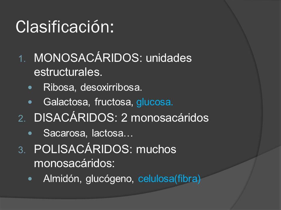 Clasificación: 1. MONOSACÁRIDOS: unidades estructurales. Ribosa, desoxirribosa. Galactosa, fructosa, glucosa. 2. DISACÁRIDOS: 2 monosacáridos Sacarosa