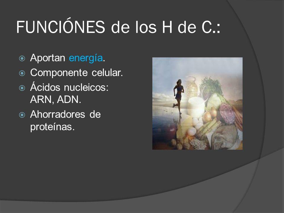 FUNCIÓNES de los H de C.: Aportan energía. Componente celular. Ácidos nucleicos: ARN, ADN. Ahorradores de proteínas.