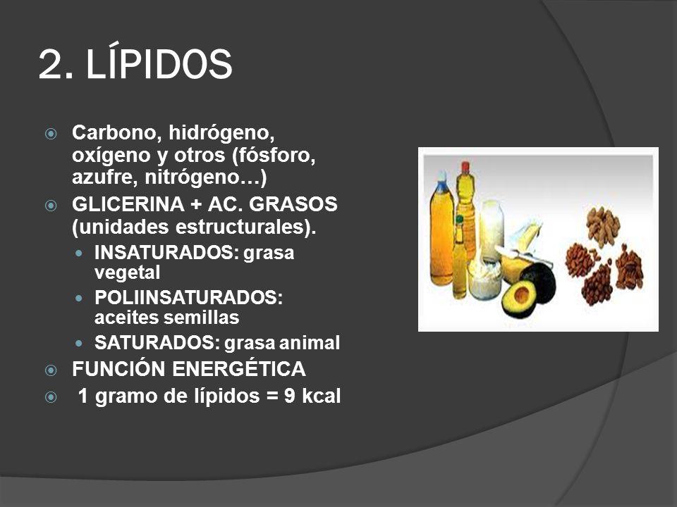 2. LÍPIDOS Carbono, hidrógeno, oxígeno y otros (fósforo, azufre, nitrógeno…) GLICERINA + AC. GRASOS (unidades estructurales). INSATURADOS: grasa veget
