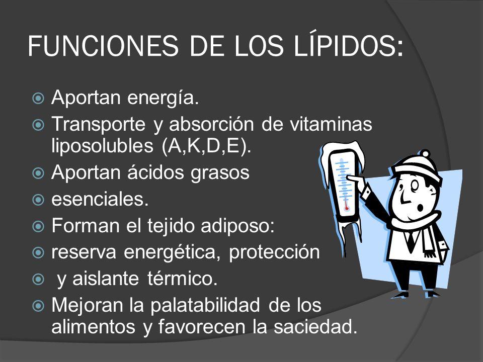 FUNCIONES DE LOS LÍPIDOS: Aportan energía. Transporte y absorción de vitaminas liposolubles (A,K,D,E). Aportan ácidos grasos esenciales. Forman el tej