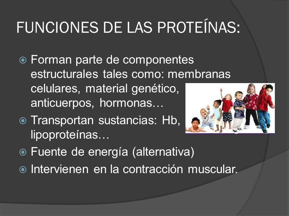 FUNCIONES DE LAS PROTEÍNAS: Forman parte de componentes estructurales tales como: membranas celulares, material genético, anticuerpos, hormonas… Trans