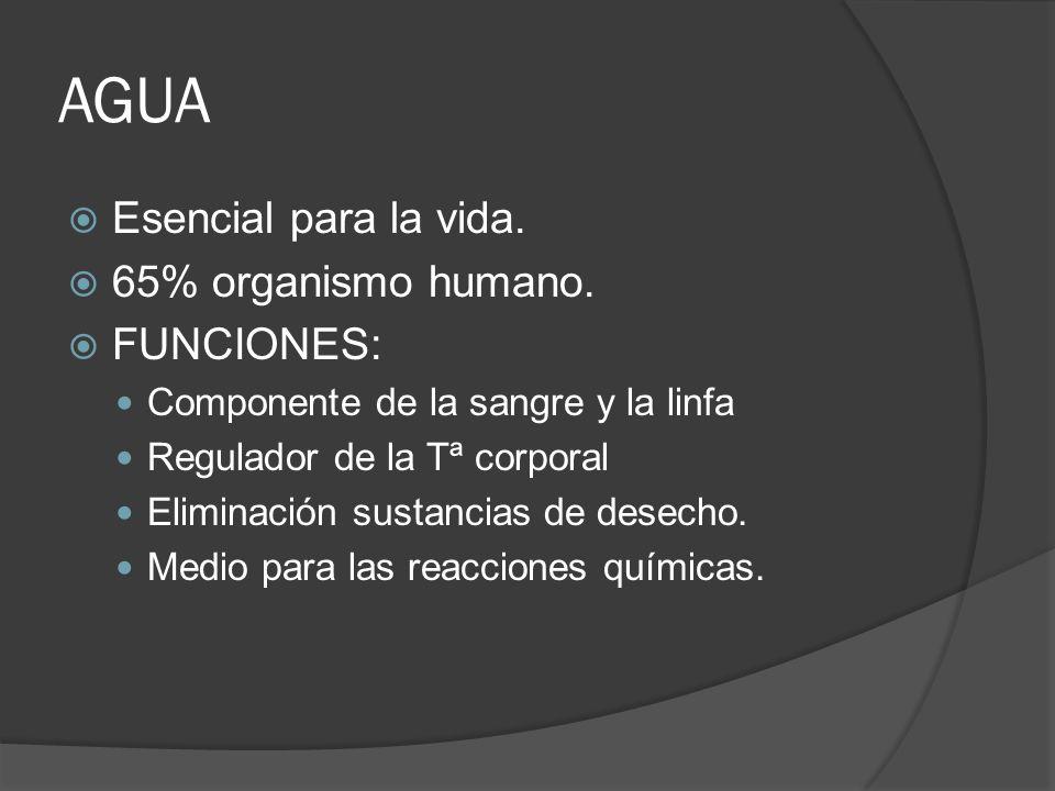 AGUA Esencial para la vida. 65% organismo humano. FUNCIONES: Componente de la sangre y la linfa Regulador de la Tª corporal Eliminación sustancias de