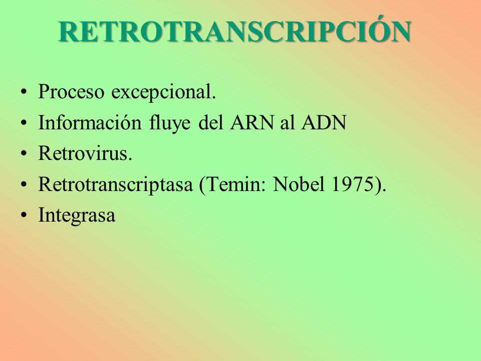 RETROTRANSCRIPCIÓN Proceso excepcional. Información fluye del ARN al ADN Retrovirus. Retrotranscriptasa (Temin: Nobel 1975). Integrasa