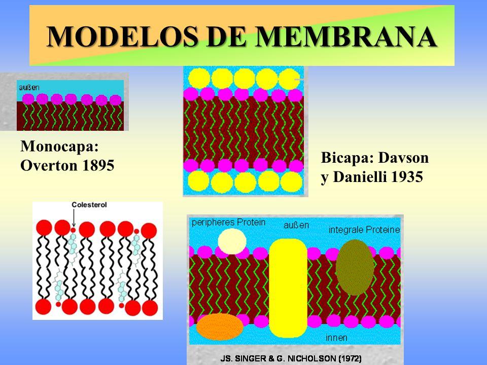 Monocapa: Overton 1895 Bicapa: Davson y Danielli 1935 MODELOS DE MEMBRANA